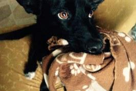 Cani a Berlino…Un bene di Lusso?