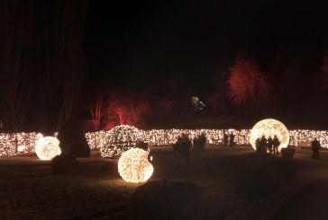 Christmas Garden: un'infusione di luci per Natale
