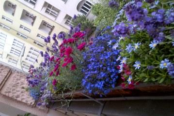 Piccola guida di giardinaggio per competere con i balconi berlinesi