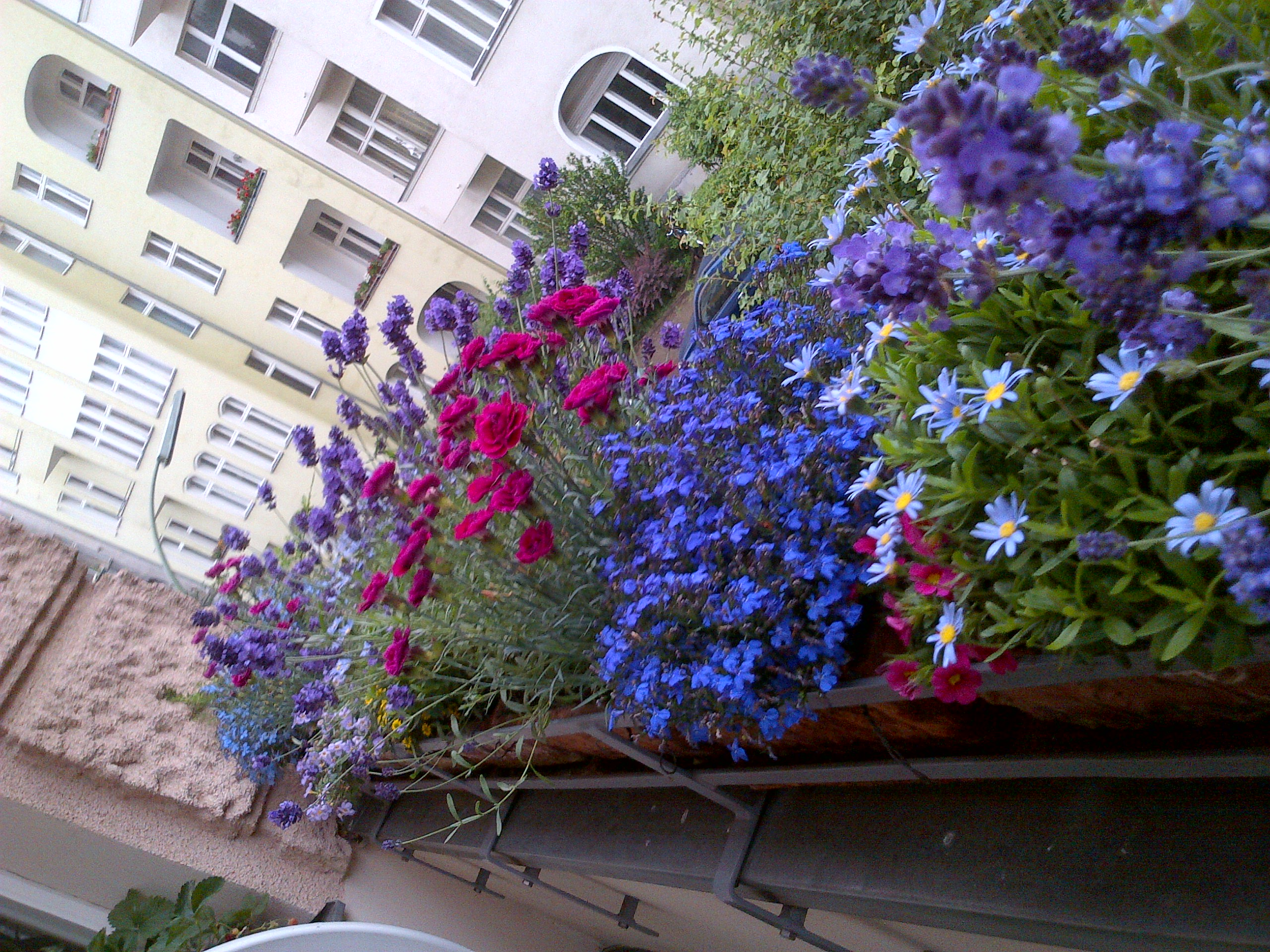 Piccola guida di giardinaggio per competere con i balconi berlinesi ...