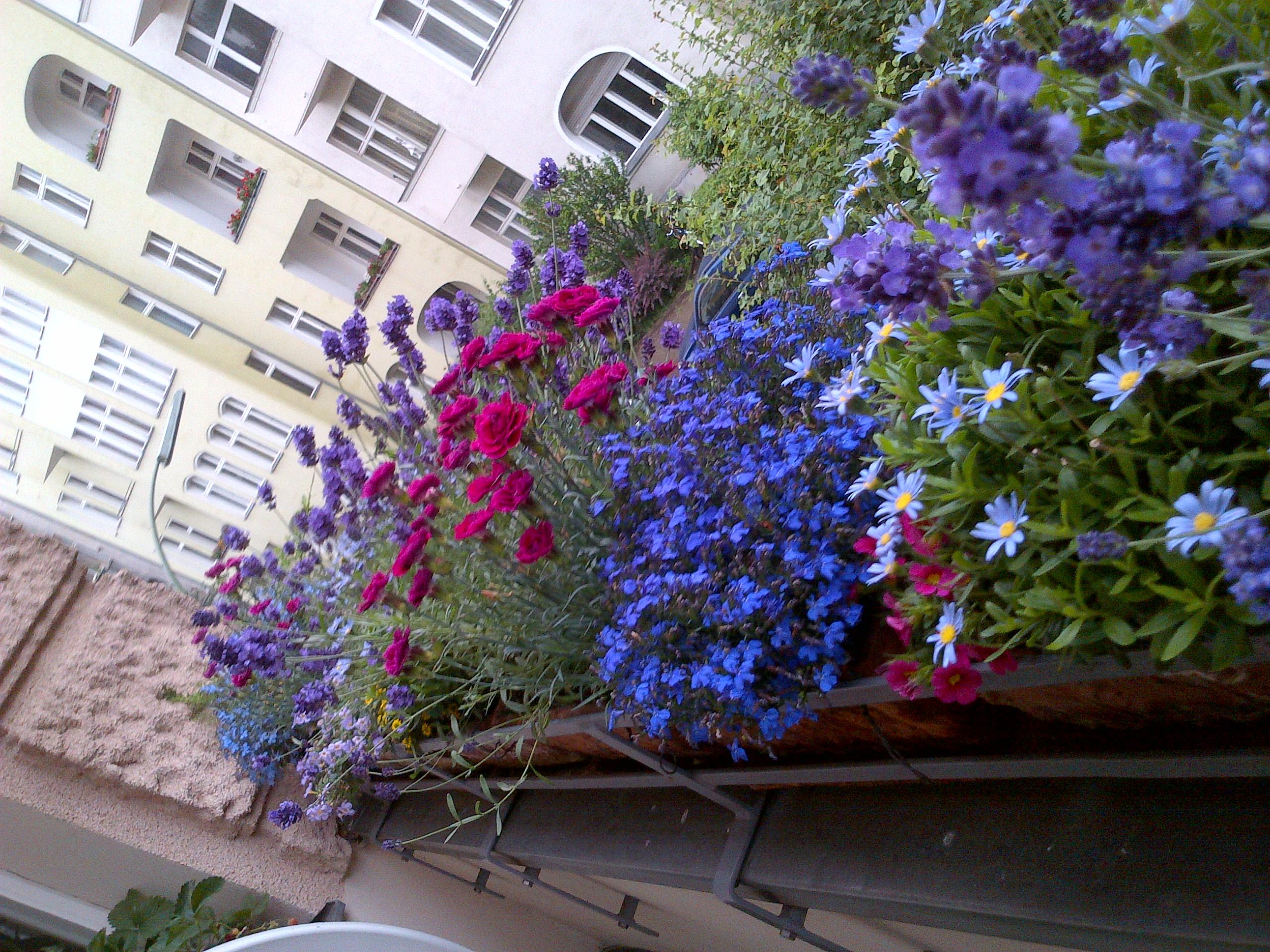 Tipi di fiori da balcone for Tipi di fiori