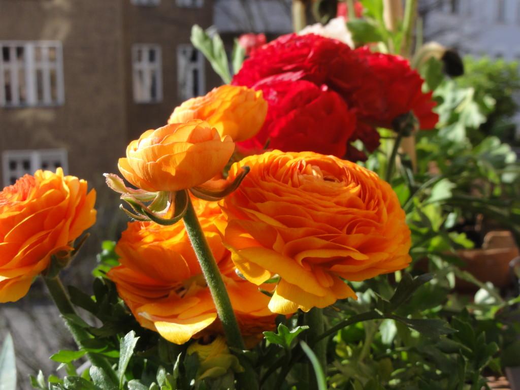 Piccola guida di giardinaggio per competere con i balconi for Piante colorate da esterno