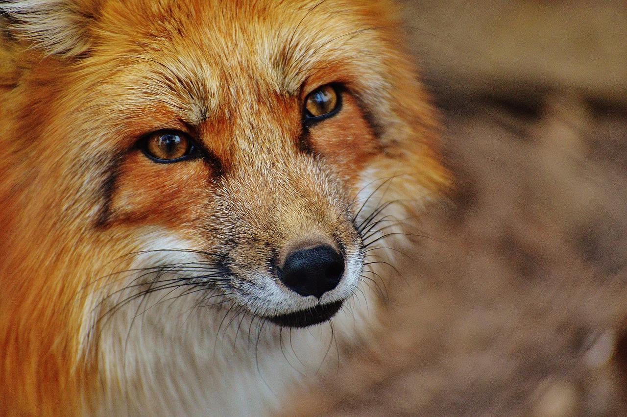 Animali selvatici a Berlino: li avete già visti tutti?