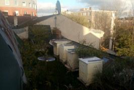 Le api di Humboldthain